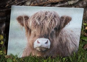 Red Calf.  Highland Cow Glass Chopping Board Large Size Toughened Glass
